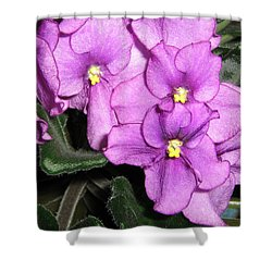 African Violets Shower Curtain by Barbara Yearty