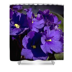 Shower Curtain featuring the photograph African Violets by Phyllis Denton