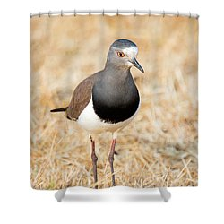 African Wattled Lapwing Vanellus Shower Curtain
