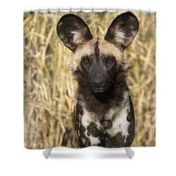Shower Curtain featuring the photograph African Wild Dog Okavango Delta Botswana by Suzi Eszterhas