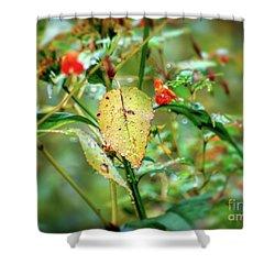 Shower Curtain featuring the photograph After An Autumn Rain by Kerri Farley