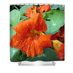 After Rain Shower Curtain by Vesna Martinjak