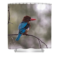 After The Dive - White-throated Kingfisher Shower Curtain