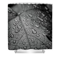 After The Rain #2 Shower Curtain