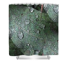 After The Rain 4 Shower Curtain by Tim Allen