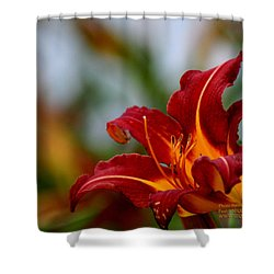 Shower Curtain featuring the photograph After The Rain Came The Flowers  by Paul SEQUENCE Ferguson             sequence dot net