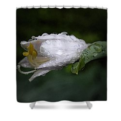 After The Rain - Hosta Macro Shower Curtain