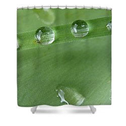 Shower Curtain featuring the photograph After The Rain by Jean Bernard Roussilhe