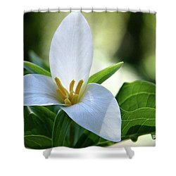 After The Rain Shower Curtain by Sheila Ping