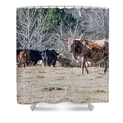 Afternoon In The Pasture Shower Curtain