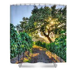 Afternoon In The Vineyard Shower Curtain