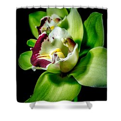 Afterthoughts Shower Curtain