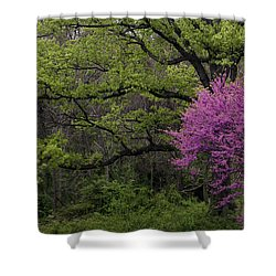 Shower Curtain featuring the photograph Afton Virginia Spring Red Bud by Kevin Blackburn