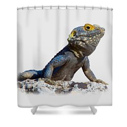 Agama Basking On A Rock T-shirt Shower Curtain