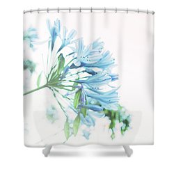 Shower Curtain featuring the photograph Agapanthus 1 by Cindy Garber Iverson