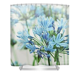 Shower Curtain featuring the photograph Agapanthus 2 by Cindy Garber Iverson