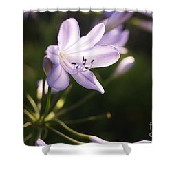 Agapanthus Shower Curtain by Cassandra Buckley
