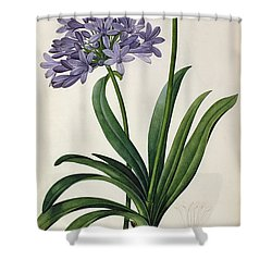 Agapanthus Umbrellatus Shower Curtain