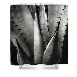 Shower Curtain featuring the photograph Agave And Patterns by Eduard Moldoveanu