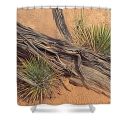 Agave And Weathered Branch Shower Curtain