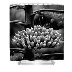 Agave Buds Shower Curtain by Vicki Pelham