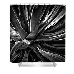 Agave Burst Shower Curtain by Lynn Palmer