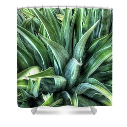 Shower Curtain featuring the photograph Agave by Lynn Geoffroy