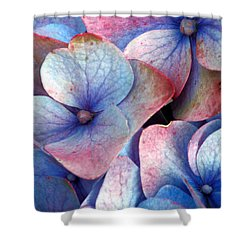 Ageing Hydrangea Shower Curtain by Gaspar Avila