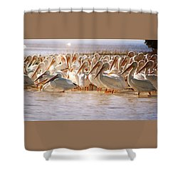 Aglow White Pelicans Shower Curtain