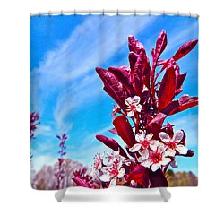 Aglow With Beauty Shower Curtain by Randy Rosenberger