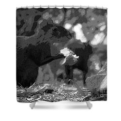 Agouti At Supper Shower Curtain
