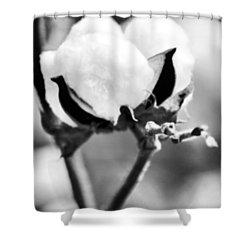 Agriculture- Cotton 2 Shower Curtain