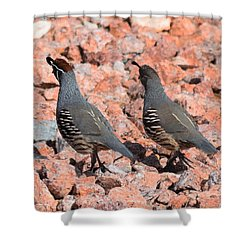 Ahhhh My Little Desert Quail Shower Curtain