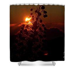Ahinahina - Silversword - Argyroxiphium Sandwicense - Sunrise Shower Curtain by Sharon Mau