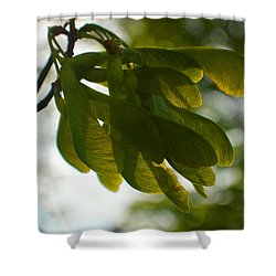 Air And Breeze Shower Curtain by Tina M Wenger