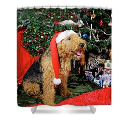 Airedale Terrier Dressed As Santa-claus Shower Curtain