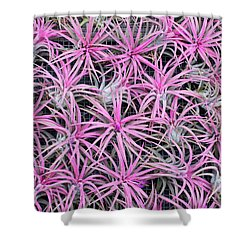 Shower Curtain featuring the photograph Airplants by Tim Gainey