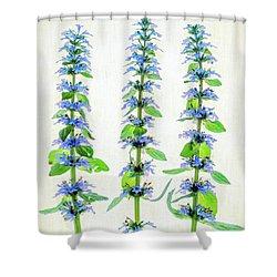 Ajuga Blooms Shower Curtain