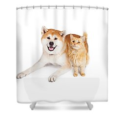 Akita Dog And Tabby Cat Over White Background Shower Curtain