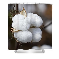 Alabama Cotton Boll Shower Curtain