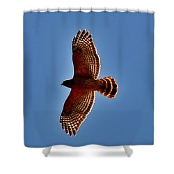 Osprey Shower Curtain