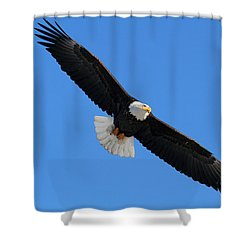 Alaska Bald Eagle Shower Curtain