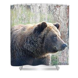 Shower Curtain featuring the photograph Alaska Brown Bear  by Dyle   Warren