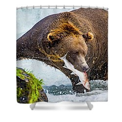 Alaska Brown Bear Shower Curtain