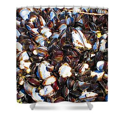 Alaska Clams2 Shower Curtain