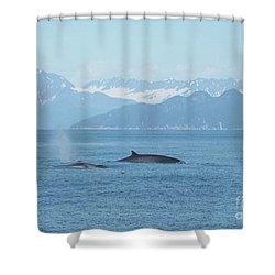 Alaska Finback Whales Shower Curtain