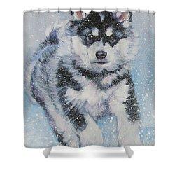 alaskan Malamute pup in snow Shower Curtain by Lee Ann Shepard
