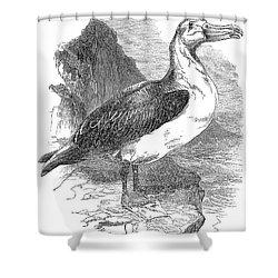Albatross Shower Curtain by Granger