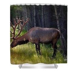 Alberta Elk  Shower Curtain by Elaine Manley