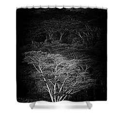Shower Curtain featuring the photograph Albezia Tree by Roger Mullenhour